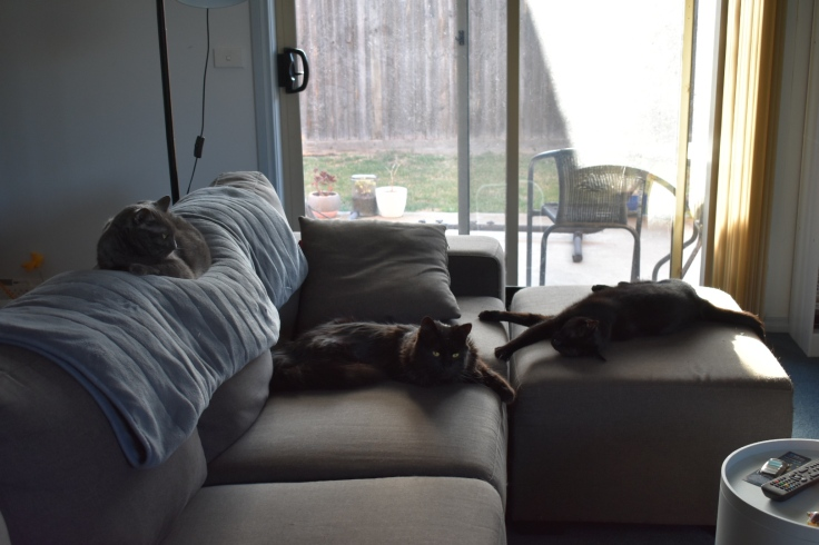 A photo of my three cats sprawled across my lounge