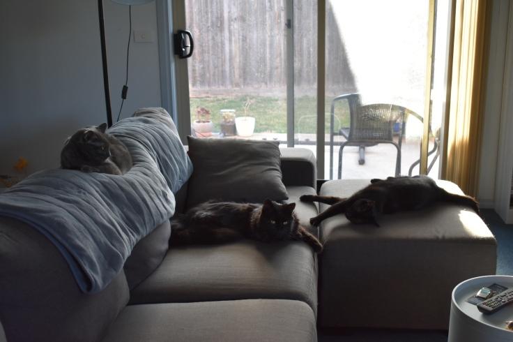A photo of my three cats sprawled across my lounge