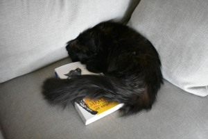 A photo of Fluffy napping while curled around a copy of Darkdawn by Jay Kristoff