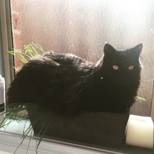 A photo of Fluffy sitting in a pot plant
